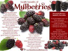 Health Benefits of Mulberries [Healthy, Smoothies, Vegetarian, No-cook, Breakfast, Desserts, Nutrition, Fruit]