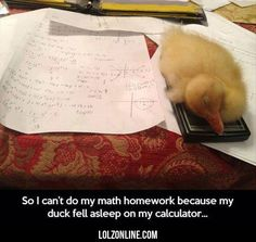 So I Can't Do My Math Homework Because My Duck…