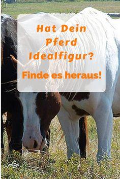 Der Body Condition Score (BCS) hilft, anhand einfacher Merkmale, dein Pferd in ein 9-stufiges Beurteilungsraster von 0 zu mager bis 9 übergewichtig einzuteilen. #Pferde #Reiten