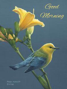 Mark Mueller Wildlife Art bird painting – warbler Source by ronitfairshtain Cute Birds, Pretty Birds, Beautiful Birds, Animals Beautiful, Cute Animals, Exotic Birds, Colorful Birds, Kinds Of Birds, Tier Fotos