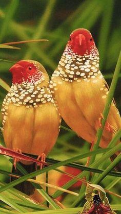 Génesis 1:19-21 Y fue la tarde y la mañana el día cuarto. Dijo Dios: Produzcan las aguas seres vivientes, y aves que vuelen sobre la tierra, en la abierta expansión de los cielos. Y creó Dios los grandes monstruos marinos, y todo ser viviente que se mueve, que las aguas produjeron según su género, y toda ave alada según su especie. Y vio Dios que era bueno.♔
