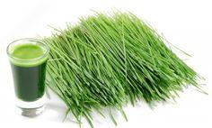 #Wheatgrass #nutrition #wellness