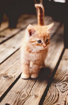 Cute Cats And Kittens Doing Funny Things Cute Kittens And Puppies Cute Fluffy Kittens, Cute Cats And Kittens, I Love Cats, Crazy Cats, Adorable Kittens, Kittens Cutest Baby, Kittens Playing, Tabby Kittens, Black Kittens