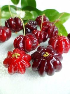 red surinam cherry fruits