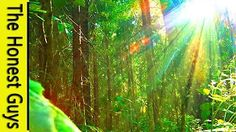 Forest Sounds, Australian Rainforest Sound Of Nature Ambience For lullaby And…