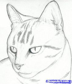 how to draw a cat head, draw a realistic cat step 4