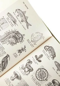 Pictorial Webster's: A Visual Dictionary of Curiosities, #ModCloth