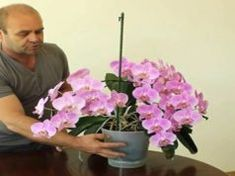 Grădinărit Archives - Page 2 of 18 - Fasingur Container Gardening, Gardening Tips, Reiki Books, Reiki Training, Learn Reiki, Reiki Practitioner, Fall Decor, Tropical, Flowers