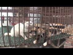 Inside the Cat and Dog Meat Market in China