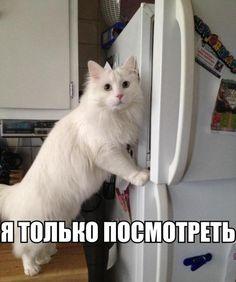 Смешные картинки про котов!