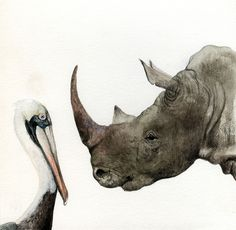 Kevin Earl Taylor, rhinoceros and pelican looking at each other one another,