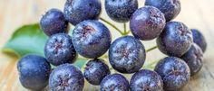 Die Aronia Beere zeichnet sich durch ihren hohen Gehalt an Antioxidantien, den vielen Vitaminen und einem sehr hohen Eisengehalt aus. Aronia Beeren sind ein Wundermittel gegen Harnwegsinfektionen, helfen gegen Magenprobleme, wirken verdauungsfördernd und aktivieren das Immunsystem. http://superfood-gesund.de/aronia-beeren/