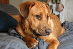 Natural Home Remedies for Itches Due to Flea Bites on Dogs