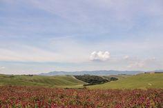 Pisan countryside [Photo Credits: Lara Musa - Tuscany Social Media Team]
