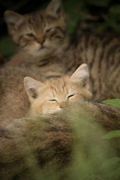 Kitten drinking the milk Plz Repin, Like or Follow!
