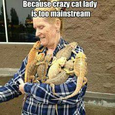 Ideas pet turtle funny cats for 2019 Les Reptiles, Cute Reptiles, Amphibians, Funny Lizards, Crazy Cat Lady, Crazy Cats, Bearded Dragon Enclosure, Bearded Dragon Funny, Terrarium Reptile