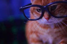 Cats wearing glasses - cats Photo