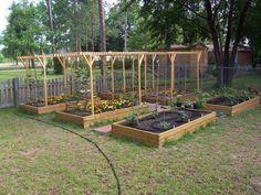 Home brewer's hop garden - 4 american hops with 4 of each in Garden Arbor, Garden Trellis, Garden Landscaping, Farm Gardens, Outdoor Gardens, Brew Garden, Hops Trellis, Hops Plant, Raised Garden Beds
