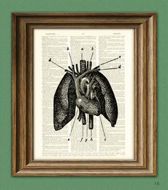 Cool human lungs and heart beautifully upcycled dictionary page book art print