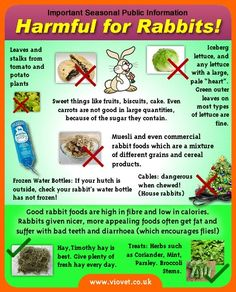 Harmful for rabbits