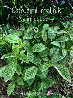 Herbalism, Herbs, Plants, Honey, Herbal Medicine, Herb, Planters, Plant, Spice
