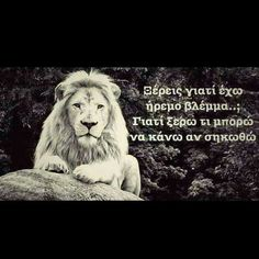 Lion for ever