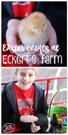 Eckert's will have the BEST Easter Egg hunt in the St. Louis Metro area again in 2016! Read about last year's event! It was a blast!