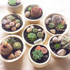 サボテン・多肉植物の寄せ植え(協力:後藤サボテン 植木鉢 かみ山陶器)Kitowa
