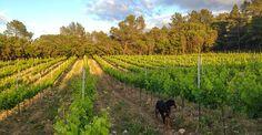 Salon Nature et Vins, gros plan sur le domaine de la Guicharde Vineyard, Nature, Outdoor, Outdoors, Naturaleza, Vine Yard, Vineyard Vines, Outdoor Games, Nature Illustration