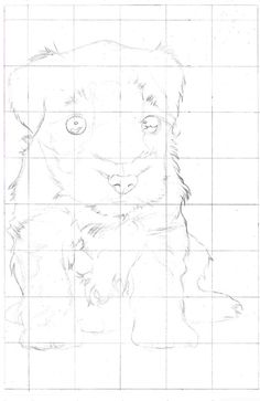 Portrait Drawing for the Ultimate Beginner: The Grid