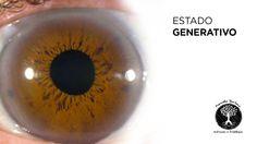 8 puntos sobre Iridología Natural, Eyes, Health, Dots, Nature, Au Natural