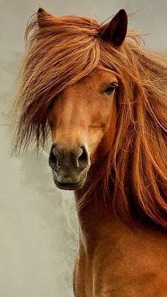 A horse's beautiful mane