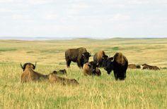 10 new travel ideas. North Dakota is on the list!!!
