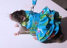 Rat Clothes..lol