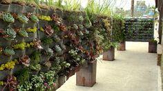 Plants On Walls vertical garden systems: Raphael On Ventura