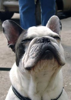 ? FRENCH BULLDOGS (originally spotted by @Linnfgm820 )
