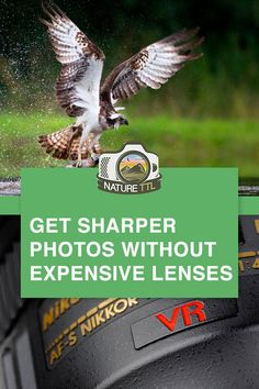 Here are some ways you can get sharper photos using less expensive lenses. Improve technique and post production skills with this wildlife photograph tutorial. Wildlife Photography Tips, Dslr Photography Tips, Landscape Photography Tips, Quotes About Photography, Photography Tips For Beginners, Photography Lessons, Aerial Photography, Photography Tutorials, Night Photography