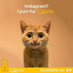 The Cats Of Instagramのインスタグラム - 芸能人のInstagram 10月30日1時