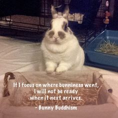 cc the Bunny, Photo courtesy of Cindy F.