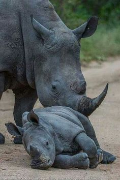 Rhino by Trevor Kleyn. National Geographic