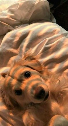 Golden Retriever - Why Are They The Perfect Pets - Doggie Woof Cute Baby Animals, Animals And Pets, Funny Animals, Funny Dogs, Wild Animals, Farm Animals, Cute Dogs And Puppies, I Love Dogs, Doggies