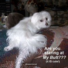 I am a 7 year old Maltese with an attitude.  My Mother has a camera and way too…