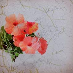 2017수업시연중에~~ : 네이버 블로그 Art Hoe Aesthetic, Learn To Paint, Paint Colors, Watercolor Paintings, Drawings, Floral, Flowers, Plants, Blog