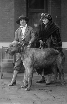 dogshow l922... Even in 1922 a big dog needs a little dog to keep it coupany.. proof!