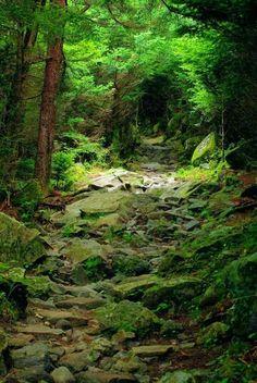 Fairy path..