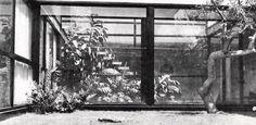 Arq. Jorge Creel de la Barra Interior garden space of a house in Lomas, Lomas de Chapultepec, Mexico City 1962