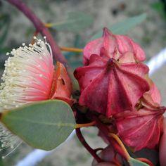 australian flowers and landscapes Australian Wildflowers, Australian Native Flowers, Australian Plants, Australian Bush, Unusual Plants, Exotic Plants, Unusual Flowers, Amazing Flowers, Australian Native Garden