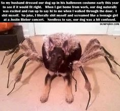 He's so cute!!!!! Scary, but cute! @Karie Stricklin Could you imagine Brody in this? It'd be like a flying, bouncing, spider dog.