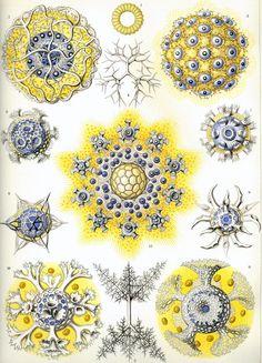 Creative Sketchbook: Creatures As Seen Through the Eyes of Ernst Haeckel!
