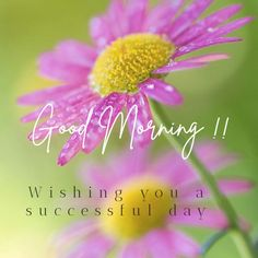 Good Morning flower Very Good Morning Images, Good Morning Flowers Pictures, Good Morning Beautiful Pictures, Good Morning Good Night, Morning Pictures, Good Morning Greeting Cards, Funny Good Morning Messages, Good Morning Greetings, Good Morning Wishes